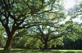 Hoe te het koord van de lichten op een bladverliezende boom te maken het Look Nice