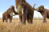 Wat zijn de verschillen tussen een mastodont & een Wolharige mammoet?