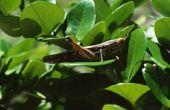 Hoe het aantrekken van Grasshoppers