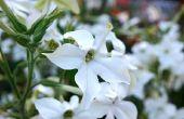Bloemen die op een veranda met westerse blootstelling aan de zon gedijen kunnen