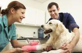 Hoe te reinigen en verzorgen van een hond incisie