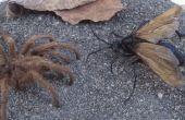 Zwart gevleugelde mieren die Sting