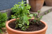 Hoe maak je een Container tuin