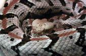 Soorten slangen in Delaware