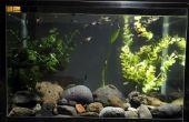 Moet ik uitschakelen mijn vis Aquarium licht 's nachts?