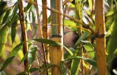 How to Get Rid van bamboe