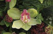 Bruiloft middelpunt ideeën met orchideeën