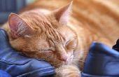 Natuurlijke behandeling voor de infectie van een gewone verkoudheid bij katten