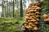 Gids voor het identificeren van boschampignons