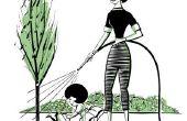 Hoe kan u helpen een boom die Is Overwatered