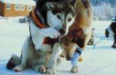 Hoe te stoppen met het schuren met een honden harnas