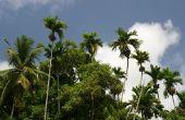Tropische plaatsen met pensioen te gaan