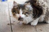Redenen een kat miauwt met speelgoed in haar mond