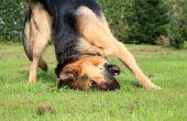 Blue Power zelfgemaakte hond oor reiniger