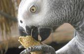 Lijst van levensmiddelen die een Afrikaanse Grijze Papegaai kan eten