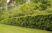 Aanbevolen planten voor Hedges in Southwest Florida