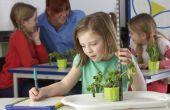 Derde-Grade lesplannen voor plantendelen