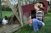How to Build een groen dak op een kippenhok