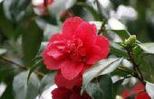 Bloemen die snel tijdens de Winter in Washington groeien