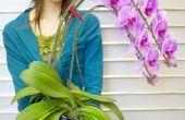 Hoe Trim een dode orchidee stam