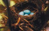 Hoe te stoppen met een Robin uit te bouwen van een Nest