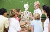Wat zijn de vijf belangrijkste functies van het skelet?