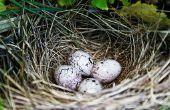 Identificatie van vogel eieren door kleur