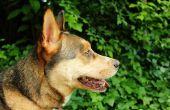 Natuurlijke teek oplossingen voor honden
