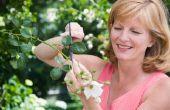 Hoe te snoeien Asters, Salvia en andere bloeiende planten