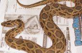 Over's werelds meest gevaarlijke slang