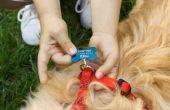 Hoe maak je een zelfgemaakte hond harnas