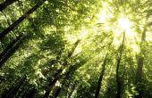 Van boom tot boom schijnt: iconische bomen van Amerika