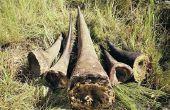 5 uitgestorven dieren in de laatste 200 jaar