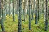 Hoe enquête een rechte lijn door de bomen