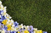 Hoe maak je een nette rand tussen het gazon en bloemperken