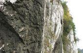 Soorten kalksteen fossielen