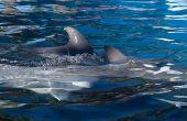 Waar dolfijnen slapen?