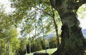 Hoe de delen van een boom om kinderen te leren kleuterschool