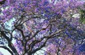 Bomen met paarse klokvormige bloemen