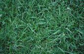 How to Grow nieuwe gras snel