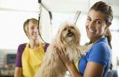 Hoe te verzorgen van een hond die zal niet werken
