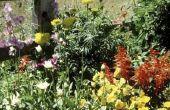 Hoe maak je tuin bloemen bloeien langer