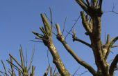 Kan een zuigercompressor zaag worden gebruikt voor het knippen van een boom?