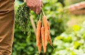 Interessante feiten over wortelen