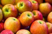 Delen van een vrucht: de appel