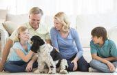 Hoe word ik een huis Foster voor honden