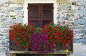 How to Plant Geranium bloemen