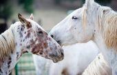 Tekenen & symptomen van leverproblemen bij paarden