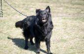 Opleiding van de hond van de politie van Zuid-Afrika