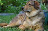 Welke oorzaken hoog Cholesterol bij honden?